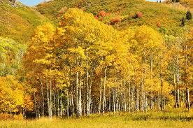 Alpine, Utah